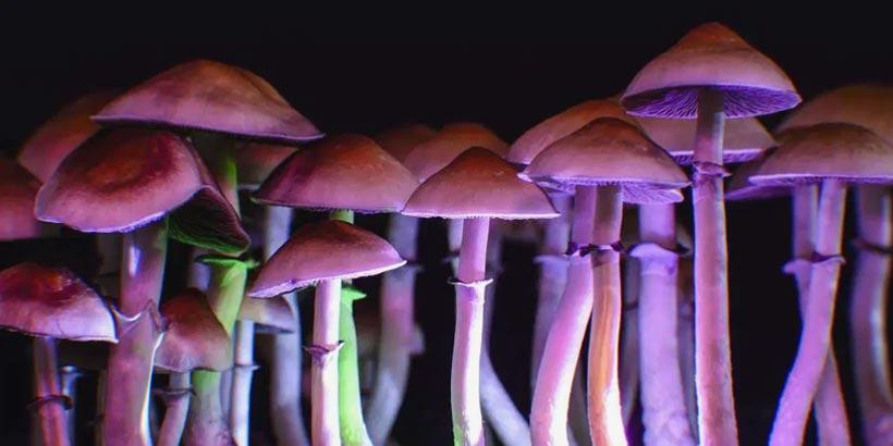 What are Magic Mushrooms?